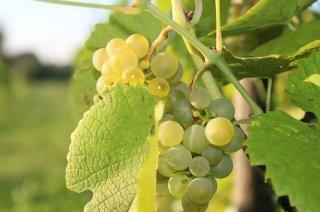 VI Dzień Wina